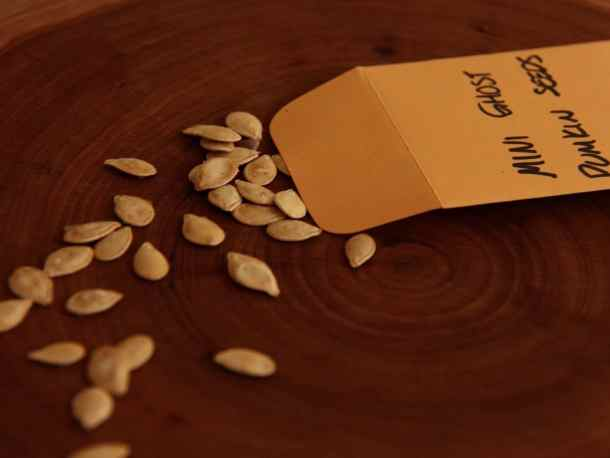 open pollinated types of seeds