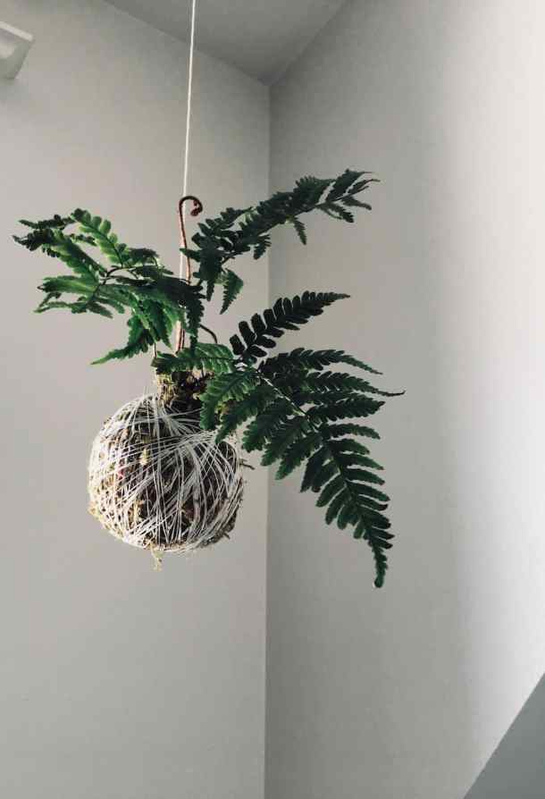 I gasped when I saw the end result! This kokedama moss ball string garden is an easy way to bring greenery into your home year-round. Check out this kokedama tutorial for the DIY details #kokedama #mossball #stringgarden #moss