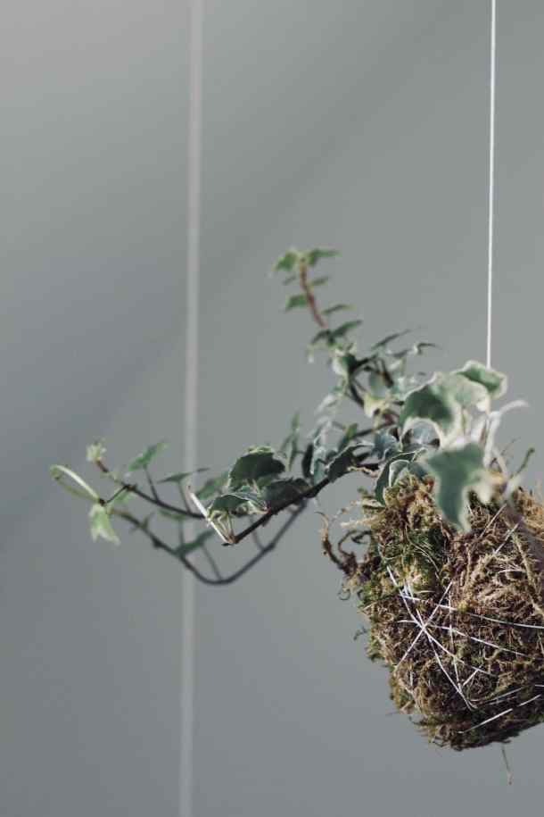 Mix clay with regular potting soil to make these unique hanging string gardens! Kokedama moss balls are wonderful easy houseplants to DIY #kokedama #mossball #stringgarden #hanginggarden
