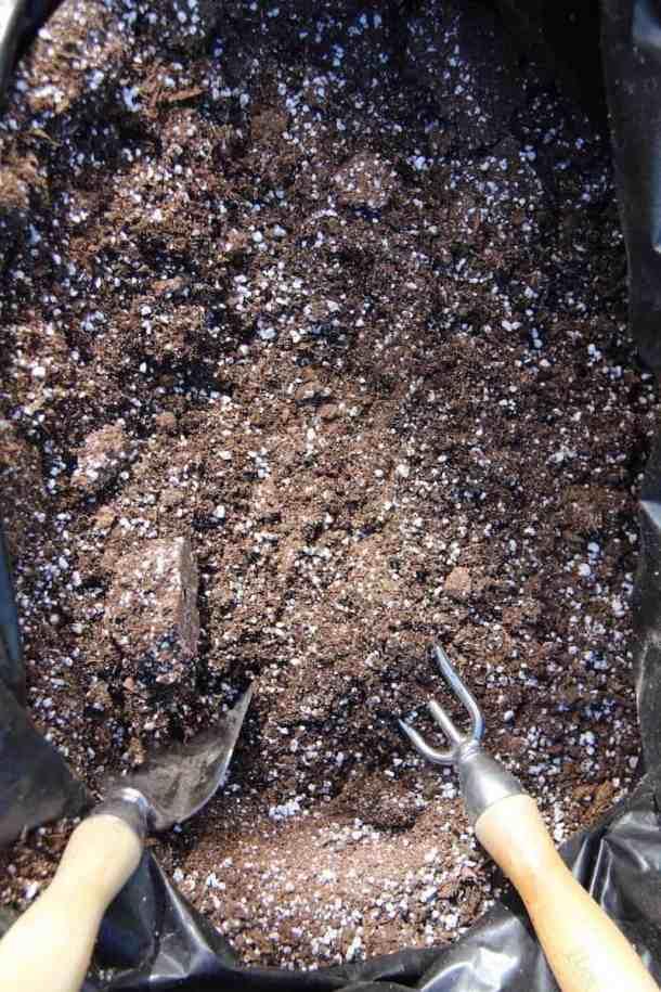 gardening 101 - small garden trowel and cultivator in organic garden soil