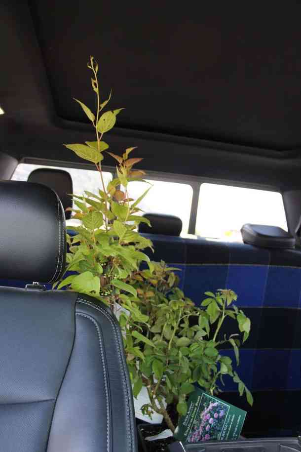 plants for sale being shipped in a truck cab