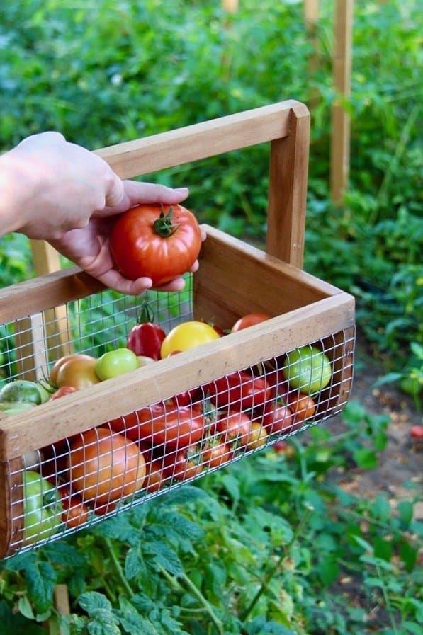 Image result for Best Organic Fertilizing for Vegetable Gardening
