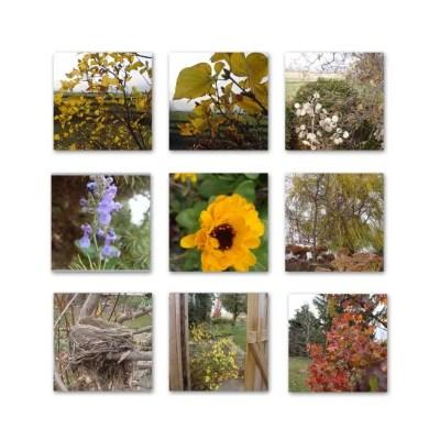 Mid November Garden Photos