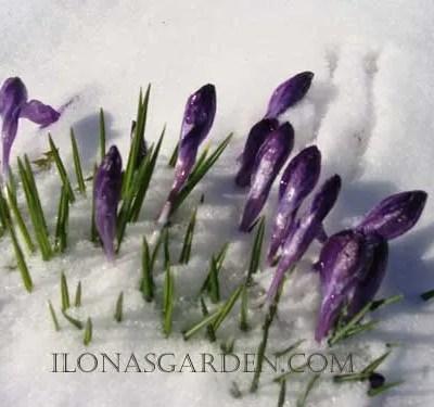 Mythical Spring
