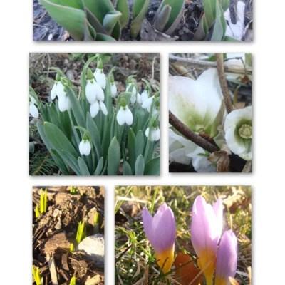 Low, Low Maintenance Spring Bulb Garden, Nothing Easier