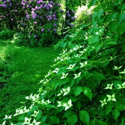 Ornamental Garden Trees For A Small Yard