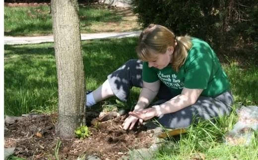 Planting around a tree