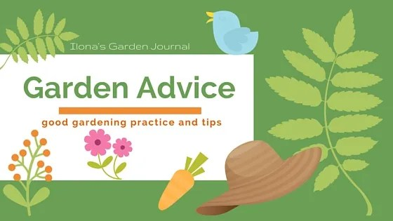 What Makes a Low Maintenance Garden?