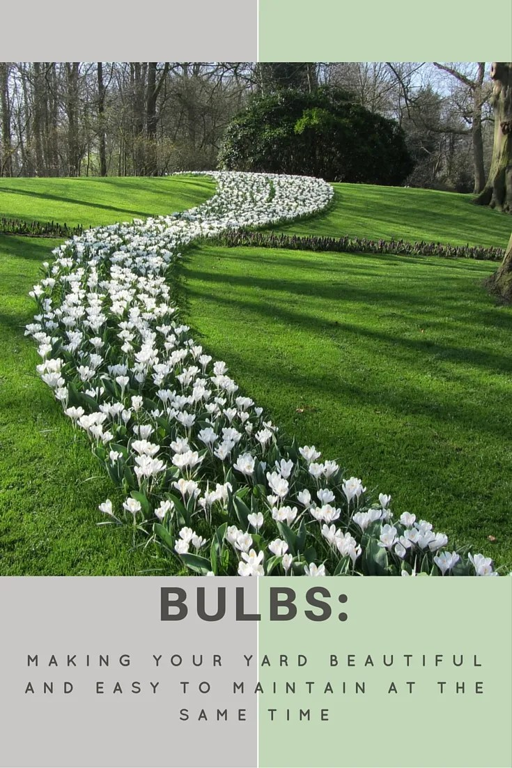 Whether Your Home Is Formal Or Informal, There Are Plant Pictures Made With  Flower Bulbs That Will Enhance The Look And Fit With The Style.