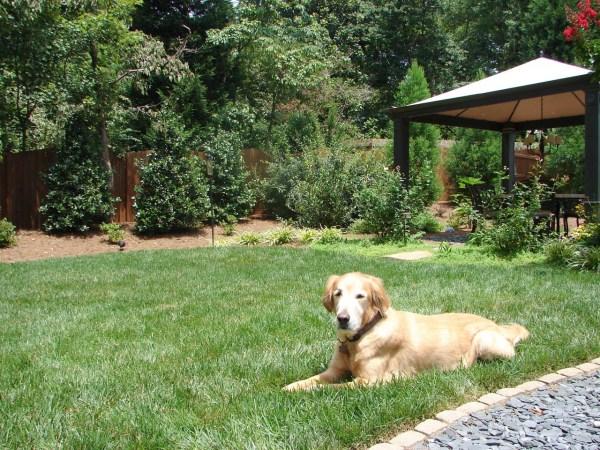 dog-friendly-landscapes