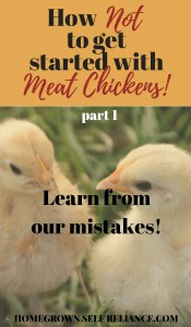 Learn from our mistakes! Read this post (part 1) before you decide to raise meat chickens yourself!