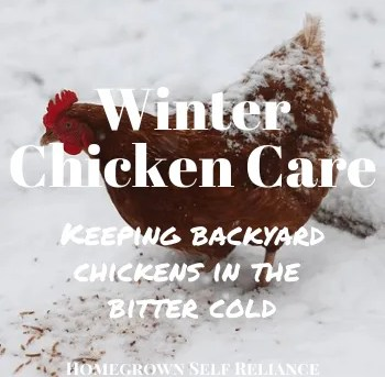 Caring for Backyard Chickens in the Winter