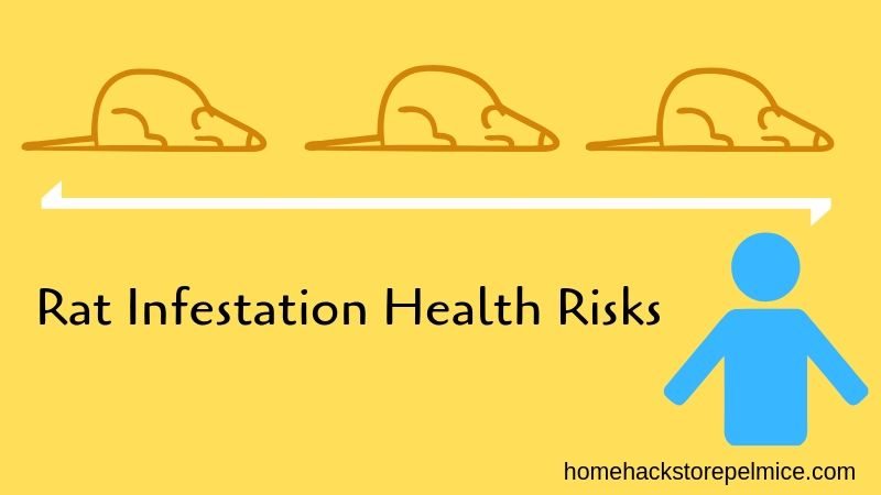 Rat Infestation Health Risks - What Diseases Do Rat Droppings Carry