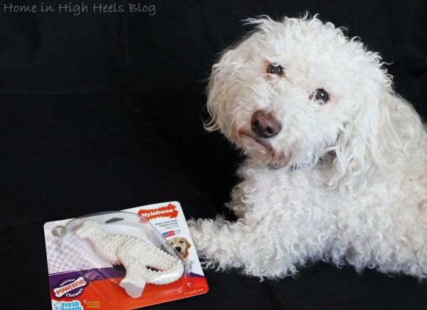 Dinosaur Dog Toys Chew