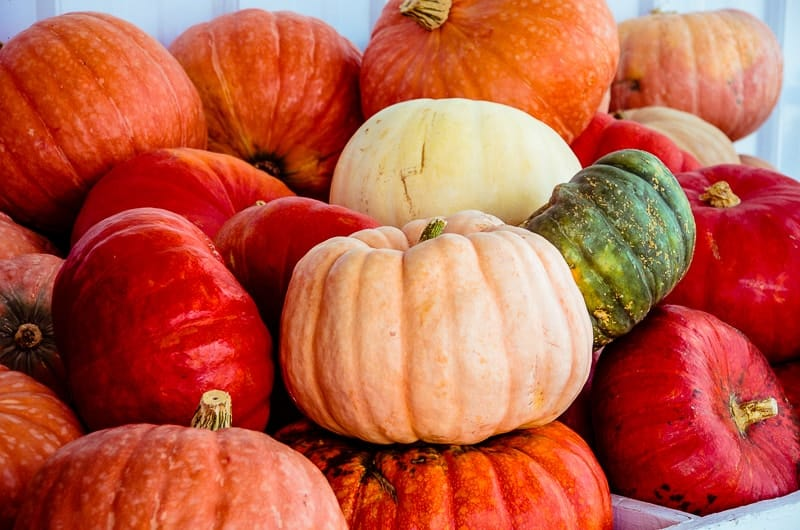 Apple Shed Pumpkins Autumn 2015