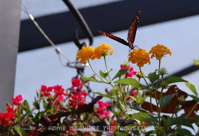 A Butterfly rests on a yellow flower