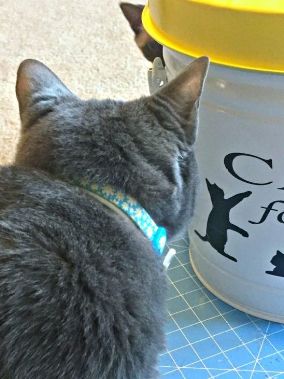 lilo-and-cat-food-storage-container