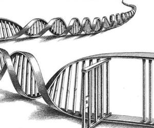 Law enforcement supports N.Y. DNA database expansion
