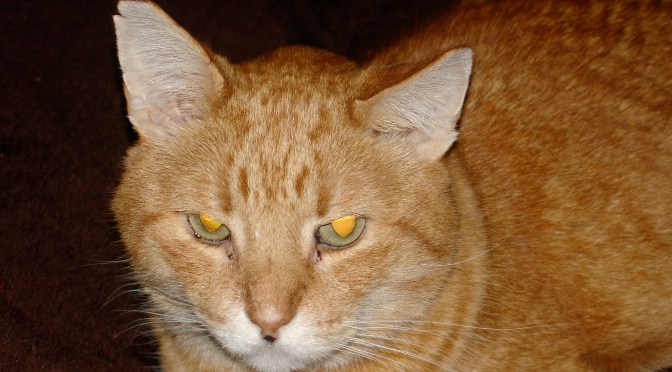 My Elderly Cat – Signs the End is Near