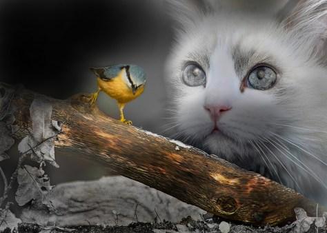 The Cat Versus Bird Debate