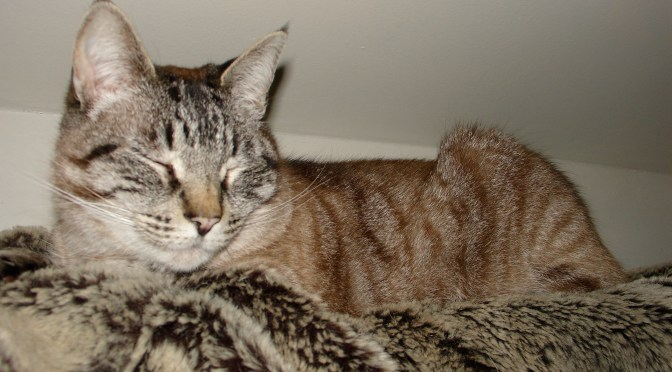 The Importance of Annual Physical Exams for Cats
