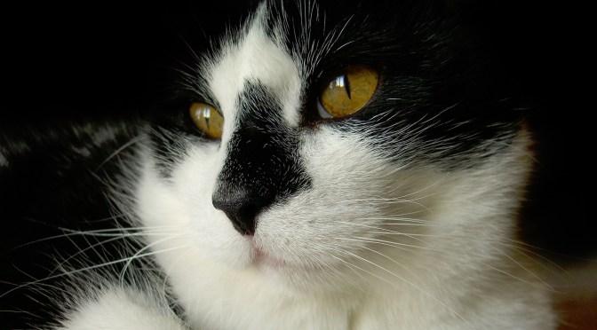 Medicating and Pilling Cats