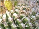 Scottsdale Desert Cactus