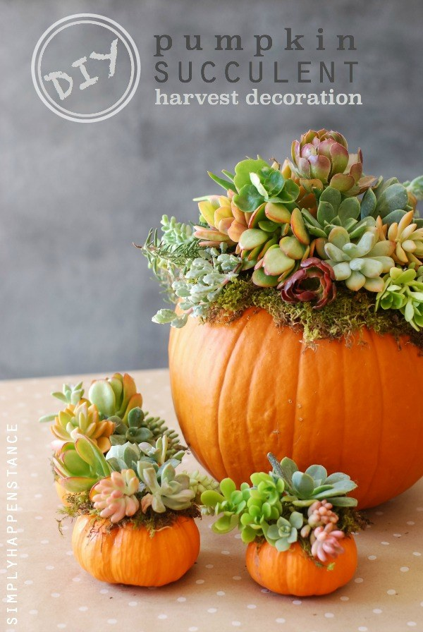 DIY: Pumpkin Succulent Harvest Decoration