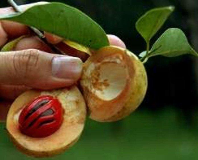 Health benefits of nutmeg oil