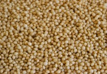 Health benefits of amaranth