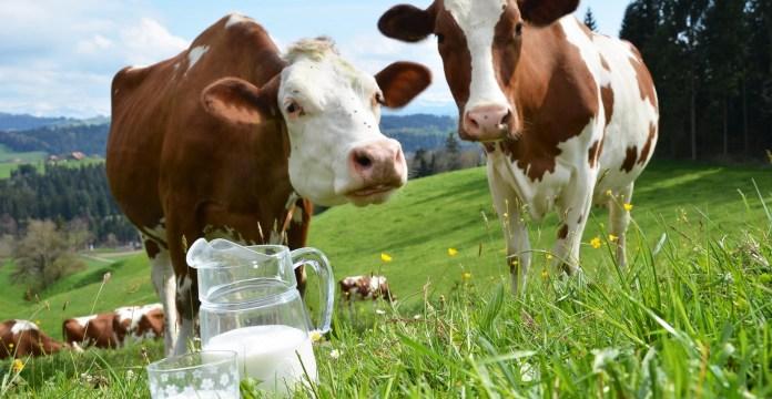 Health benefits of cow milk