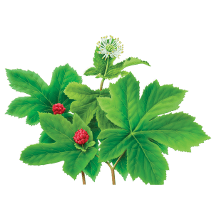 Health benefits of goldenseal