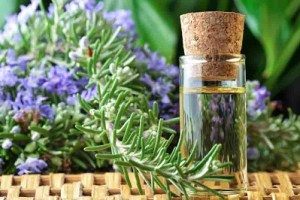 Rosemary-for-varicose-veins