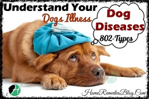 Dog Diseases - Full List of Dog Diseases