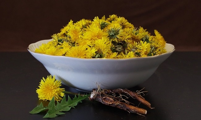 Dandelion Root For Kidney Stones Treatment