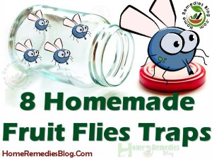 How To Get Rid of Fruit Flies With Homemade Traps