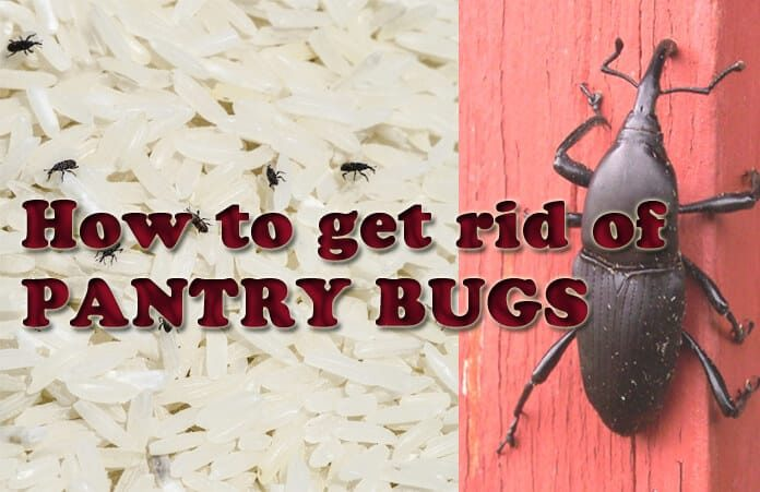 10 Proven Home Remedies To Get Rid Of Weevils Naturally