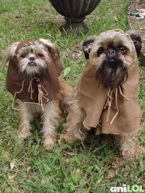Ewok Dog Costume