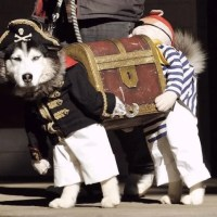 20 Funny, Creative, & Outrageous Pet Costumes