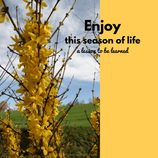 Life Transitions: yellow forsythia branch transitions into bloom