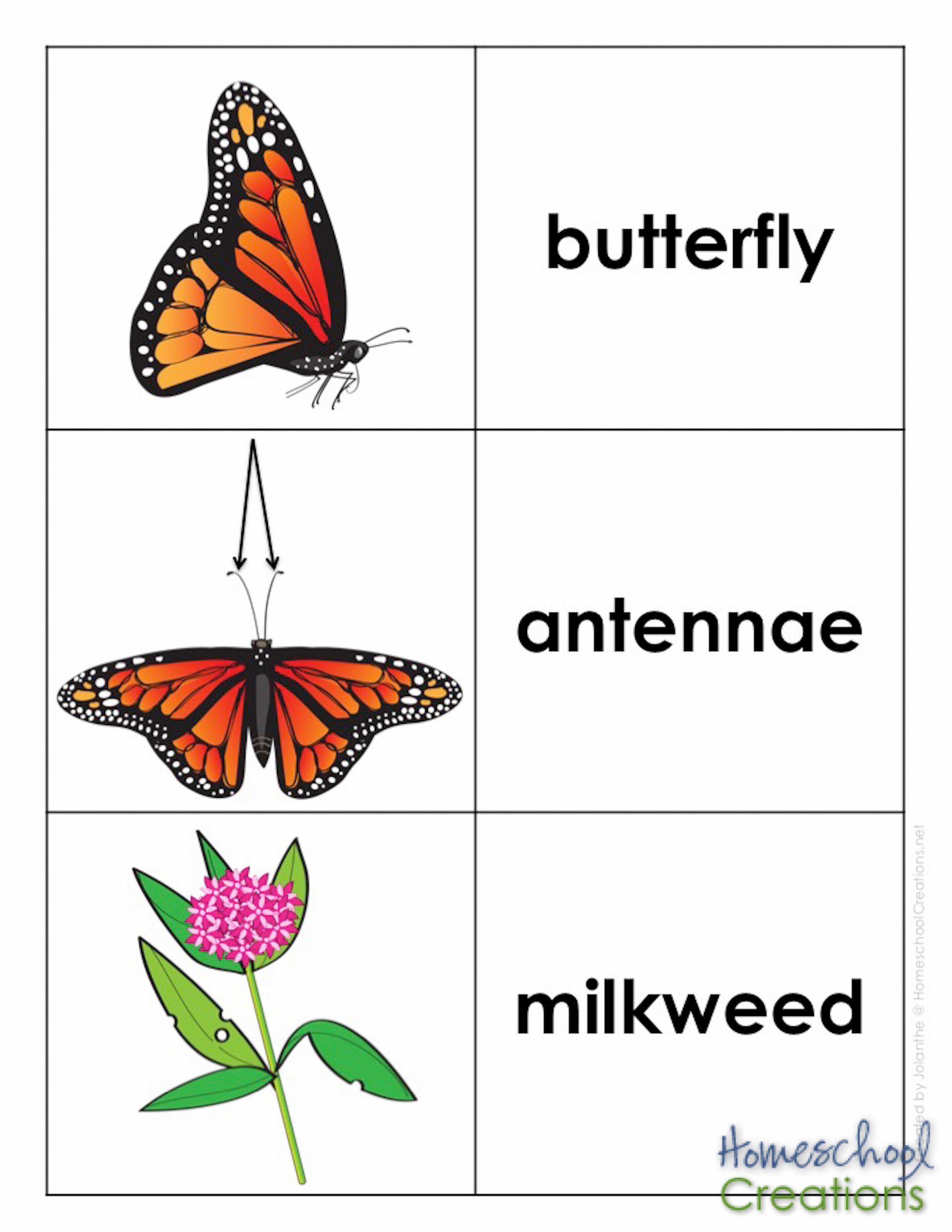 Monarch Vocabulary Words Homeschoolcreations