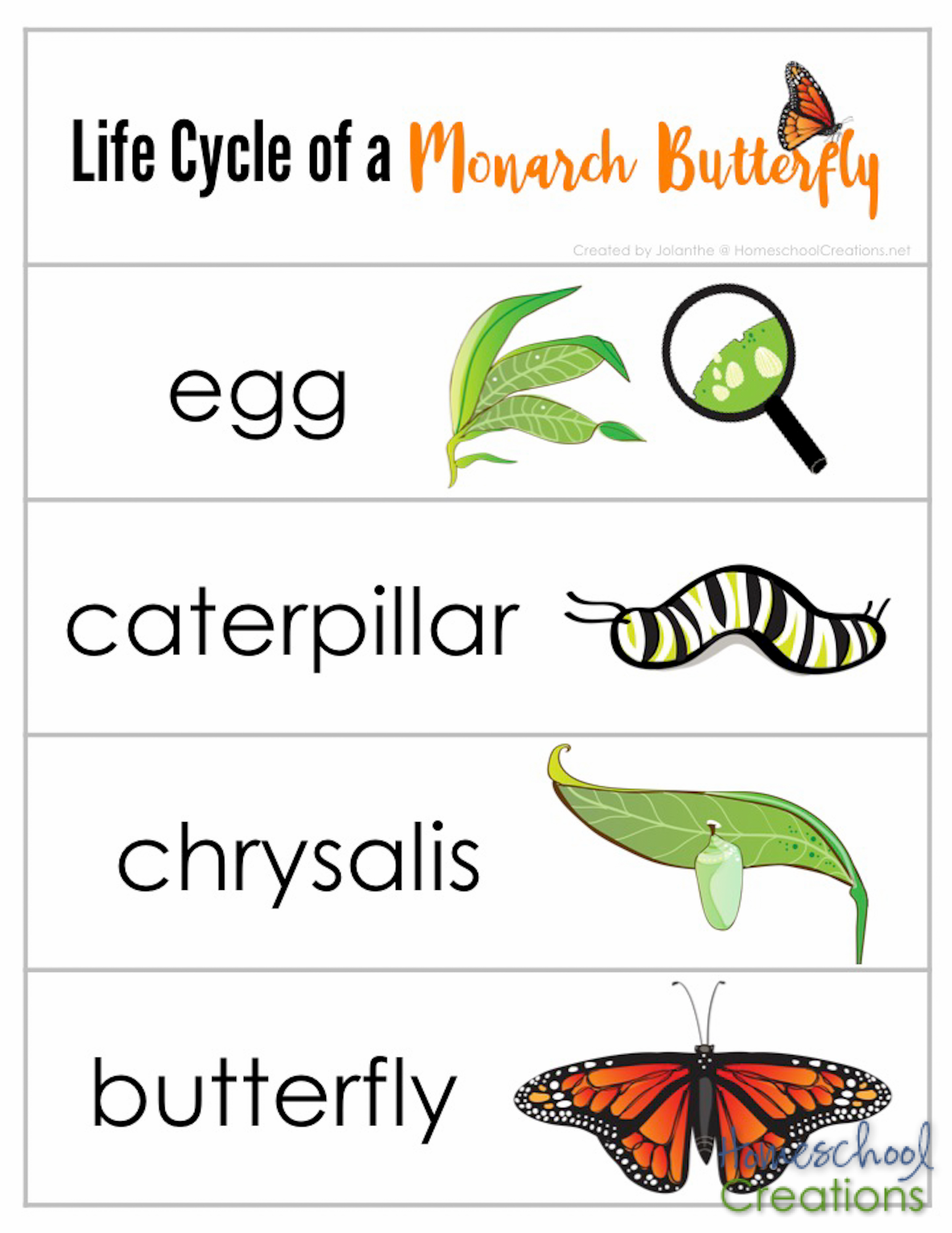 Sequencing Strips For Monarch Life Cycle