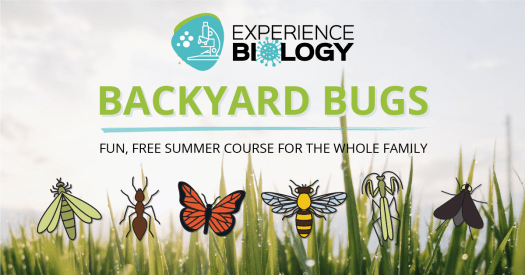 Experience Biology: Backyard Bugs fun, free, summer course for the whole family