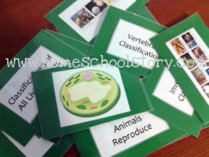 science review cards