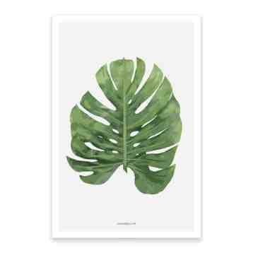 Botanische poster Monstera blad | www.homeseeds.nl