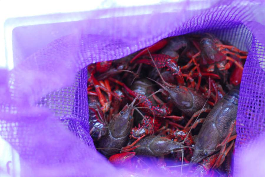 crawfish boil | Homesick Texan