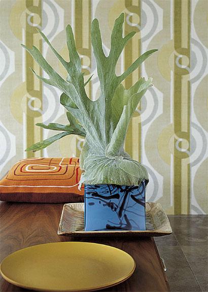 Zimmerpflanzen  Wohnideen  Dekoration  Pflanzen