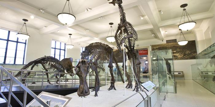 muzeum historii naturalnej w nowym jorku