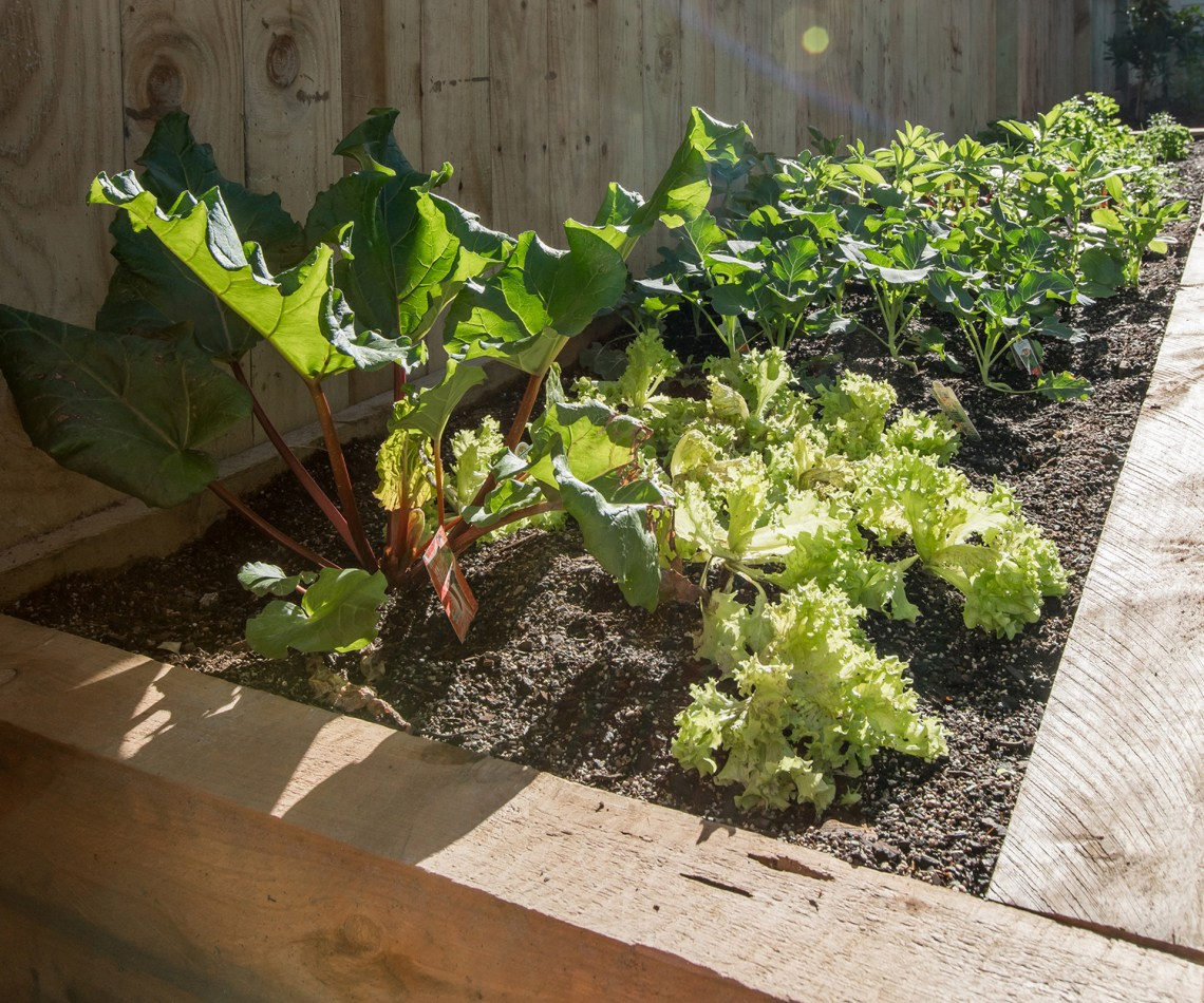 Here Are The Best Vegetables To Plant And Harvest In The Garden This March
