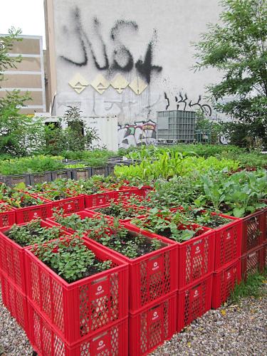 How Build Veggie Garden Box